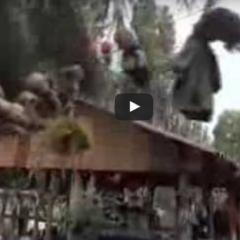 Przerażająca La Isla de la Munecas, czyli Wyspa Lalek!