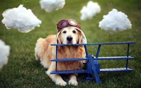 Powstał program, w którym psy uczą się LATAĆ SAMOLOTEM!