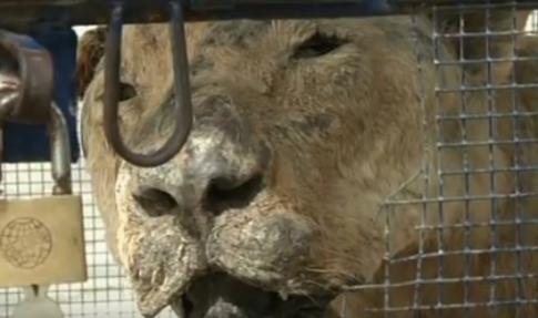 """Zoo z MARTWYMI ZWIERZĘTAMI podbija rynek! Zobaczcie nagranie """"atrakcji"""""""