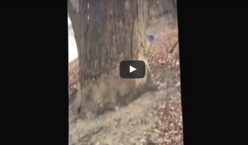 Piekielne drzewo, które płonie od wewnątrz. Zobaczcie szokujące nagranie!