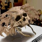 Odnaleziono czaszki przerażających hybryd ludzi ze zwierzętami!