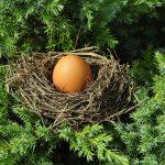 Tajemnice szeptuchy: Jak uzdrowić ciało wykorzystując zwykłe jajko!