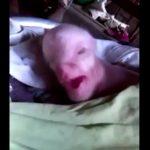 W Azji urodziła się pół człowiek-pół świnia! Zobaczcie szokujące nagranie!