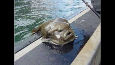 Zdjęcia przerażających stworzeń nieznanych nauce! (Nagranie)