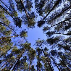 Drzewa rozmawiają ze sobą i opiekują się dziećmi… To już fakt naukowy!