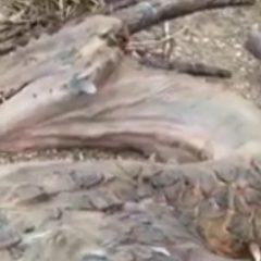 W Tybecie odnaleziono smoka? Nagranie podbija sieć!