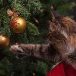 Słowiańskie Boże Narodzenie, czyli magiczne Święto Godów!