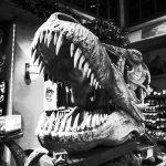 W bursztynie znaleziono ogon dinozaura!