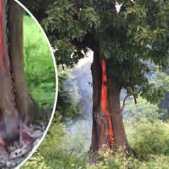 Drzewo na cmentarzu płonie od wewnątrz! Zobaczcie nagranie