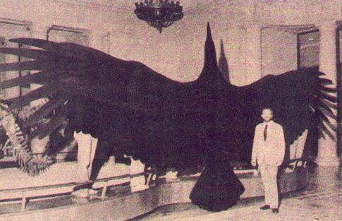 Demoniczny ptak ukazuje się coraz częściej? Zobaczcie szokujące zdjęcia