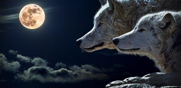 Odnaleziono czaszkę wilkołaka? Te legendarne istoty istnieją?
