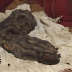 Ogromny palec znaleziony w Egipcie? Biblijni Giganci istnieli?