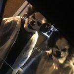 Tajemnicze klauny powóciły! Pojawiają się w lasach i wabią tam dzieci… Najnowsze nagranie tych klaunów szokuje!