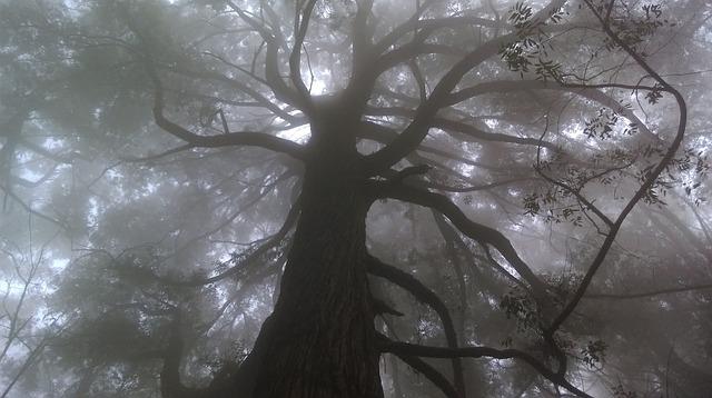 Przerażające dźwięki nagrane w lesie szokują! Nikt nie wie skąd pochodzą…