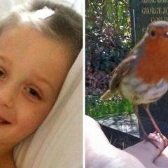 """""""Dusza mojego syna reinkarnowała się w ptaka"""" To nagranie zszokowało świat! Dowód na reinkarnację?"""