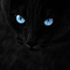 Nagrano ducha kota! Dowód że zwierzęta mają duszę?