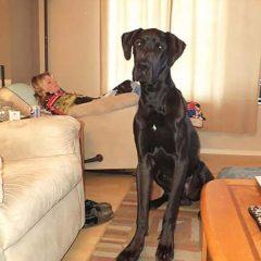 Kobieta sfotografowała ducha psa? Sami zobaczcie!