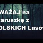 Przerażająca staruszka straszy w POLSKICH lasach! Zobacz szokujące nagranie!