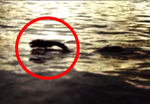 Gigantyczny potwór nagrany w rzece w Chinach? Nagranie wzbudziło kontrowersję!