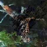 Cud? Drzewo przybrało postać Jezusa! (NAGRANIE)