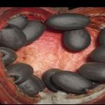 Na Marsie znaleziono OWOCE – Ich smak jest…? (NAGRANIE)