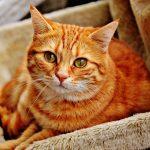 Naukowcy udowodnili, że koty mogą leczyć i przedłużać życie! Sprawdźcie, co jeszcze potrafią…?