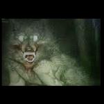 """W Niemczech nagrano Wilkołaka! """"Ta istota była pół człowiekiem pół wilkiem"""""""