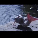 Przerażająca Syrena NAGRANA w Bałtyku! Nagrania Syren z roku 2021